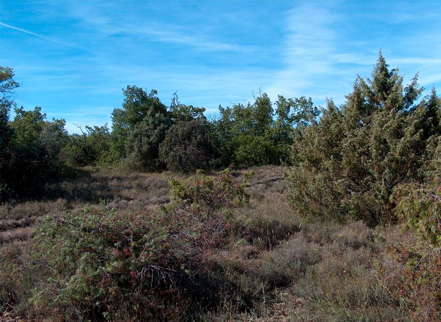 Démarcation d'une allée rectiligne dans un paysage sauvage et irrégulier de Garrigue