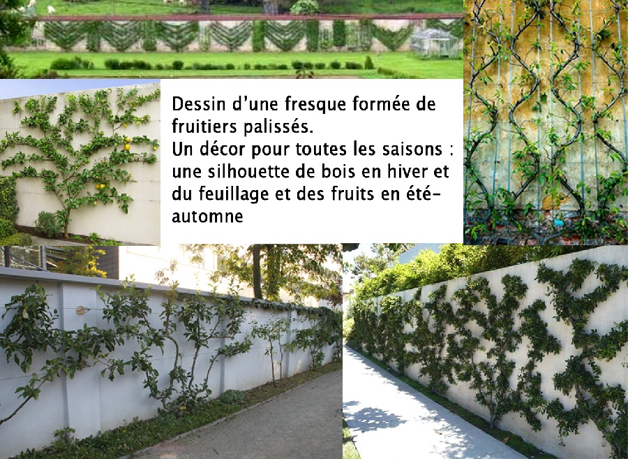 Am nagement d 39 un jardin exigu avec fruitiers for Amenagement jardin fruitier