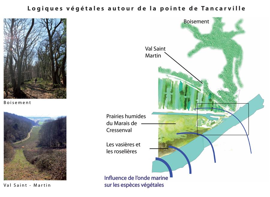 Mise en valeur d'une porte d'entrée dans le Port du Havre, la Pointe de Tancarville, ses logiques végétales