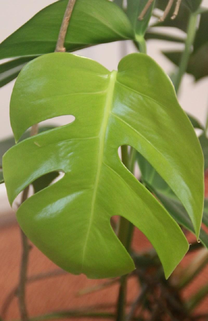 DIY Sculptez vos plantes d'intérieur