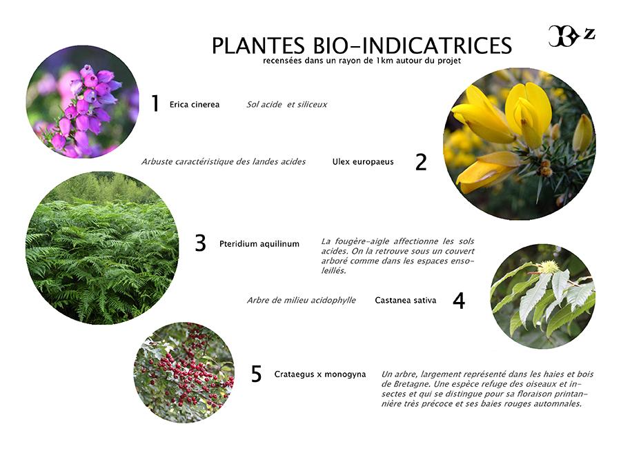 Focus sur les plantes locales